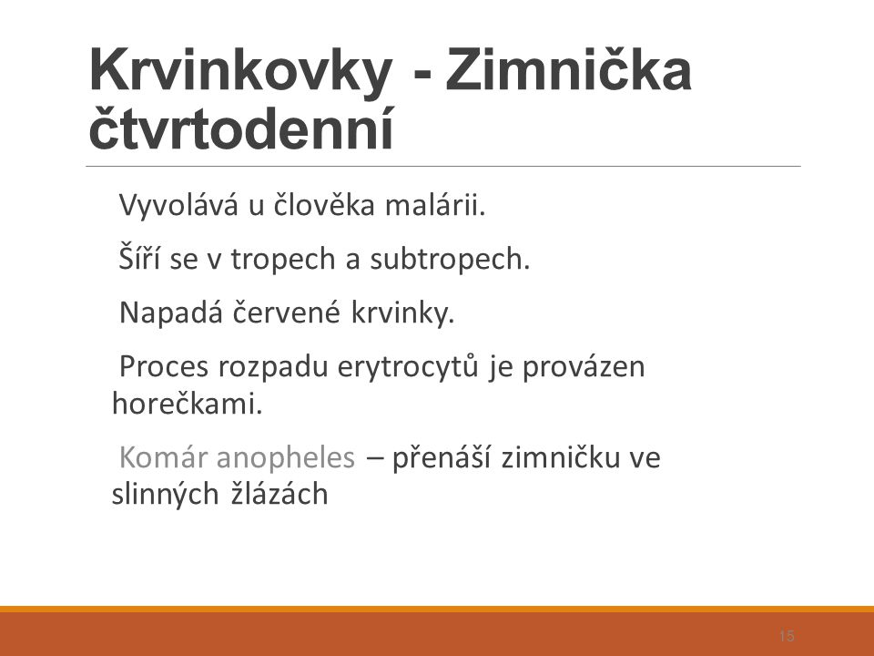 Krvinkovky - Zimnička čtvrtodenní