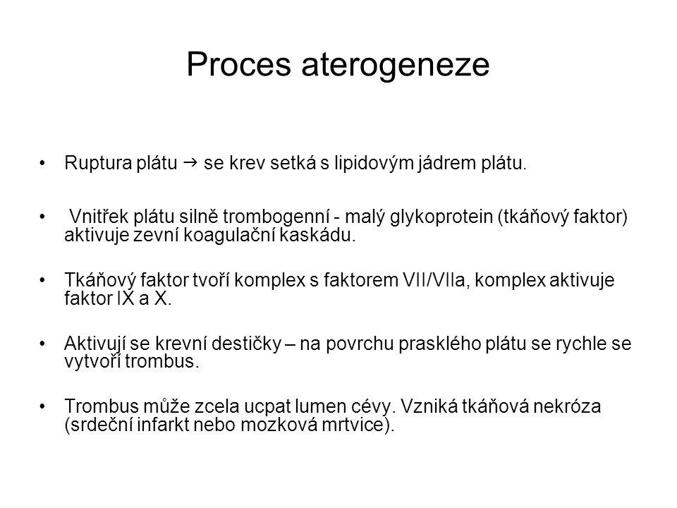 Proces aterogeneze Ruptura plátu  se krev setká s lipidovým jádrem plátu.