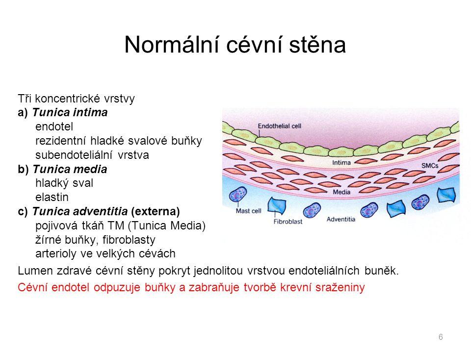 Normální cévní stěna