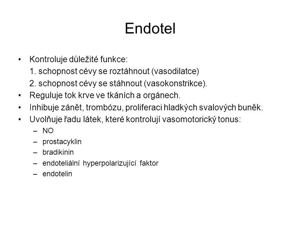 Endotel Kontroluje důležité funkce: