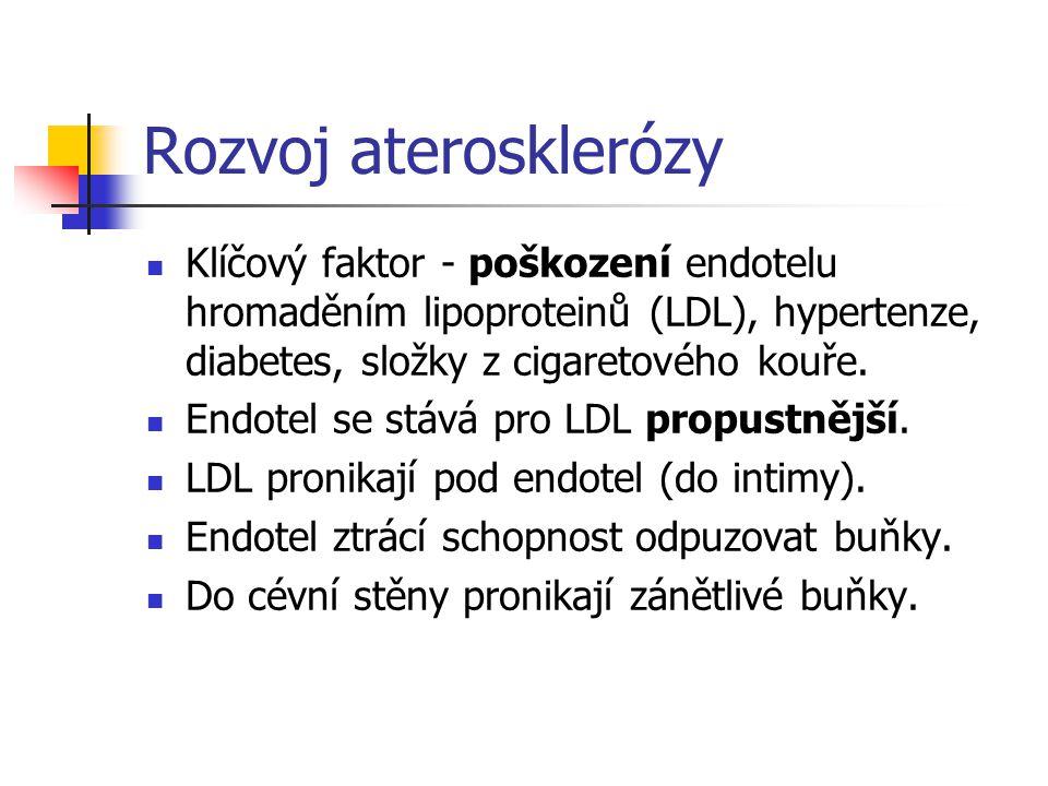 Rozvoj aterosklerózy Klíčový faktor - poškození endotelu hromaděním lipoproteinů (LDL), hypertenze, diabetes, složky z cigaretového kouře.