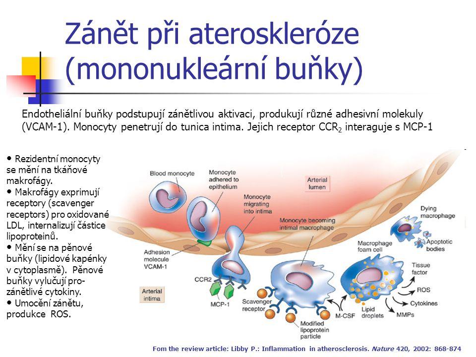 Zánět při ateroskleróze (mononukleární buňky)