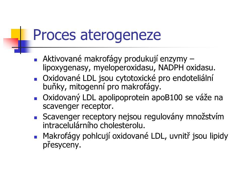 Proces aterogeneze Aktivované makrofágy produkují enzymy – lipoxygenasy, myeloperoxidasu, NADPH oxidasu.