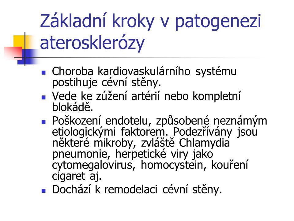Základní kroky v patogenezi aterosklerózy