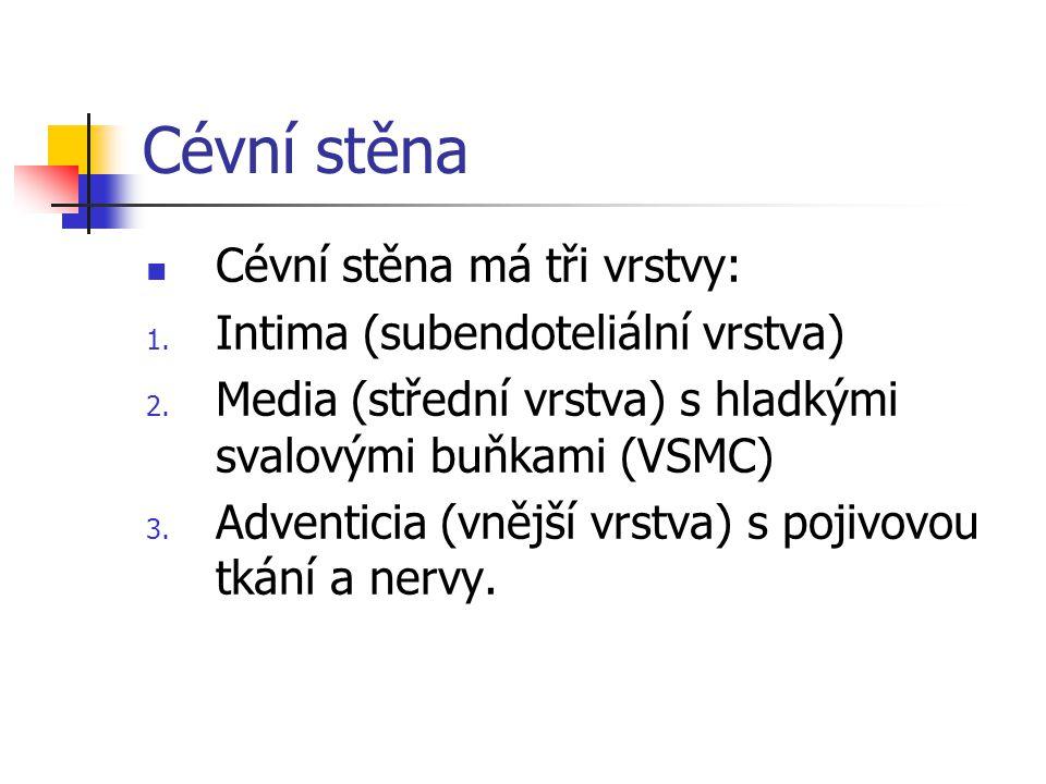 Cévní stěna Cévní stěna má tři vrstvy: Intima (subendoteliální vrstva)