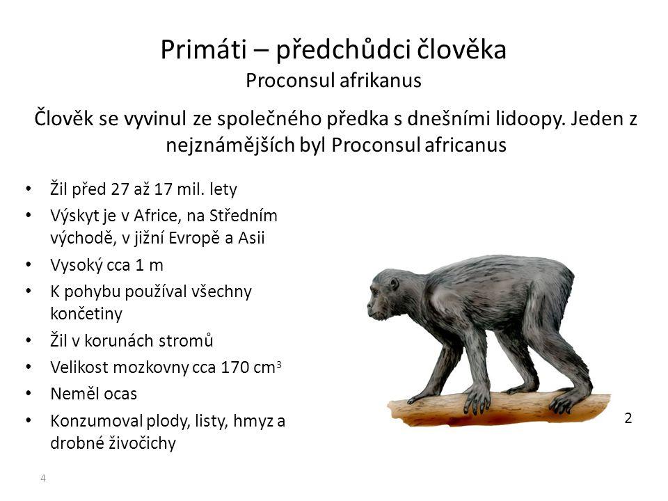 Primáti – předchůdci člověka Proconsul afrikanus