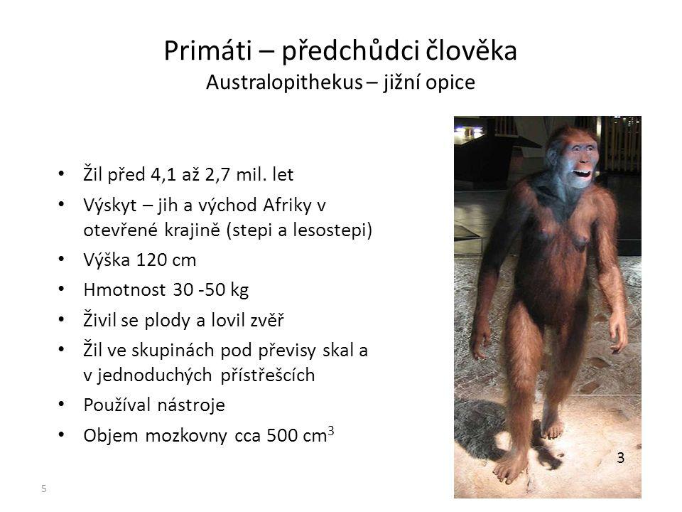 Primáti – předchůdci člověka Australopithekus – jižní opice