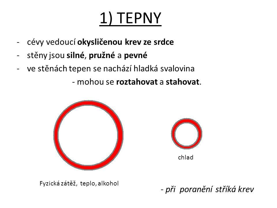 1) TEPNY cévy vedoucí okysličenou krev ze srdce