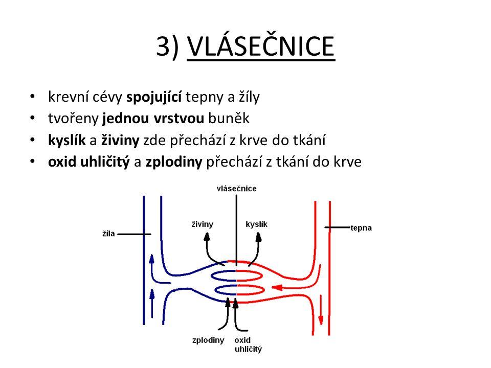 3) VLÁSEČNICE krevní cévy spojující tepny a žíly