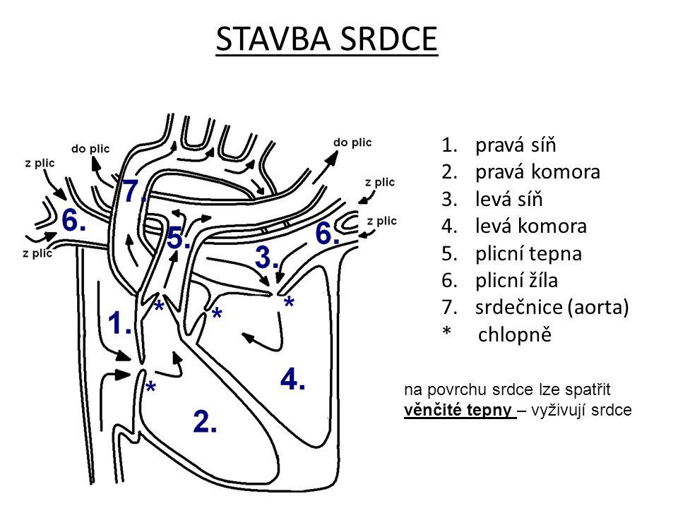 STAVBA SRDCE pravá síň pravá komora levá síň levá komora plicní tepna