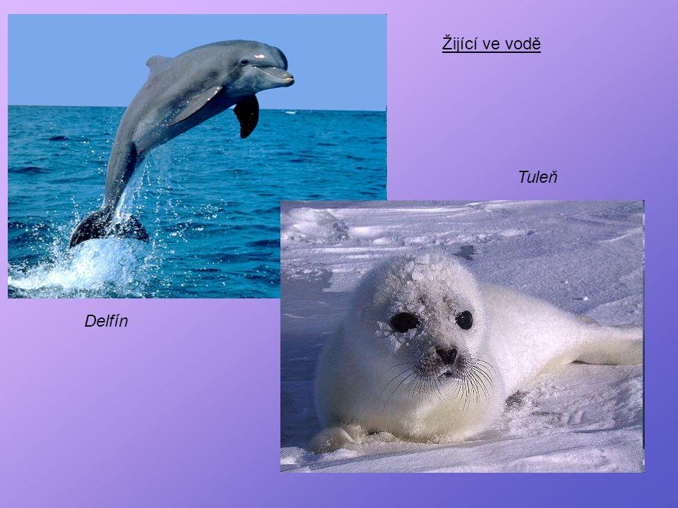 Žijící ve vodě Tuleň Delfín