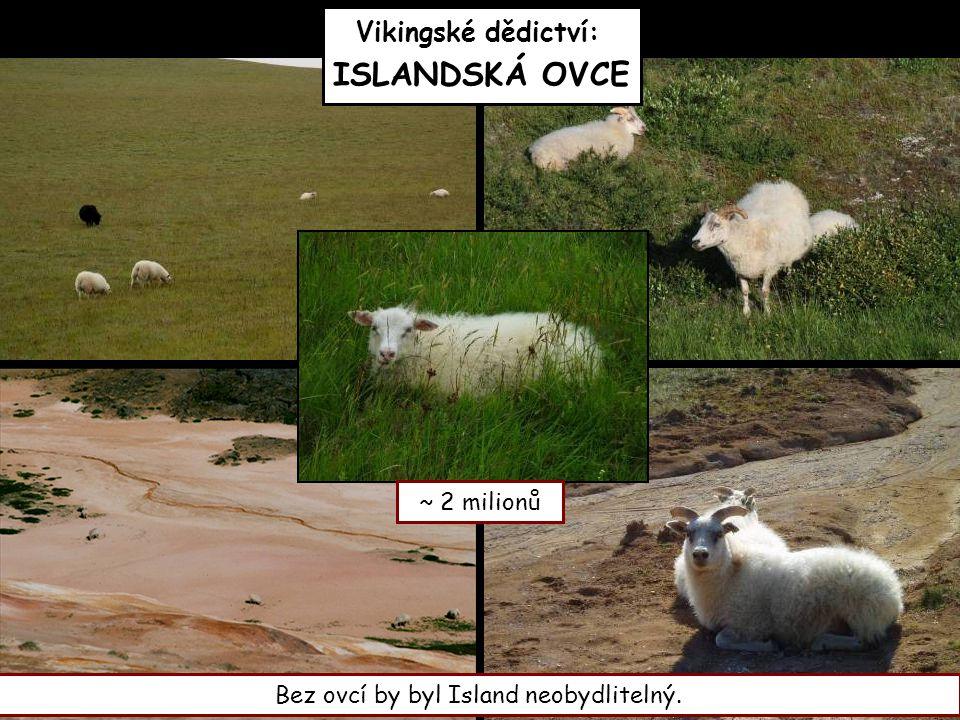 Vikingské dědictví: ISLANDSKÁ OVCE
