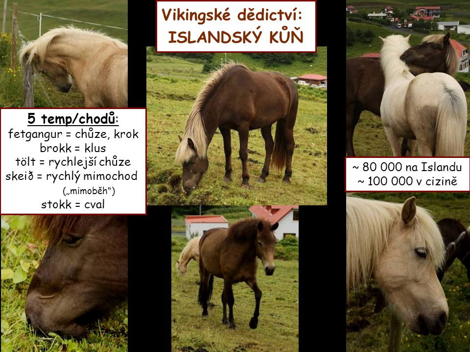 Vikingské dědictví: ISLANDSKÝ KŮŇ