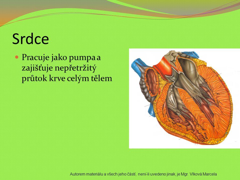 Srdce Pracuje jako pumpa a zajišťuje nepřetržitý průtok krve celým tělem.