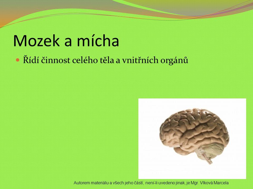 Mozek a mícha Řídí činnost celého těla a vnitřních orgánů