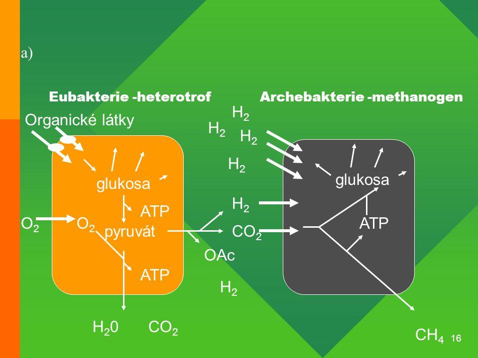 a) H2 Organické látky H2 H2 H2 glukosa glukosa H2 ATP O2 O2 ATP