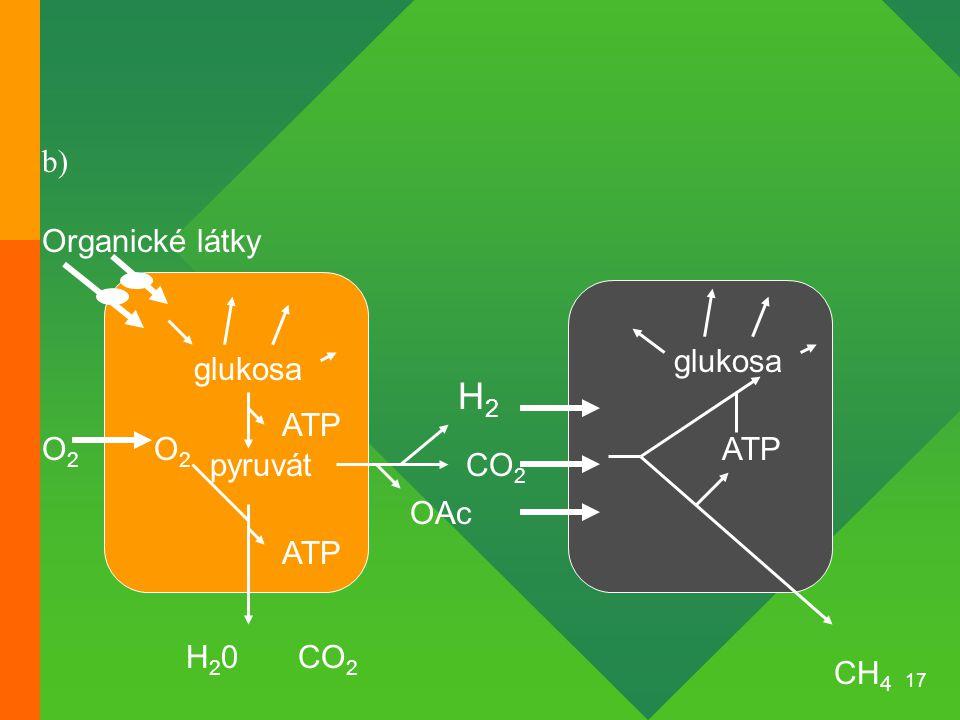 H2 b) Organické látky glukosa glukosa ATP O2 O2 ATP pyruvát CO2 OAc