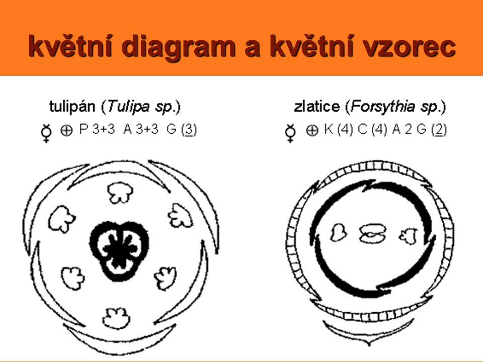 květní diagram a květní vzorec