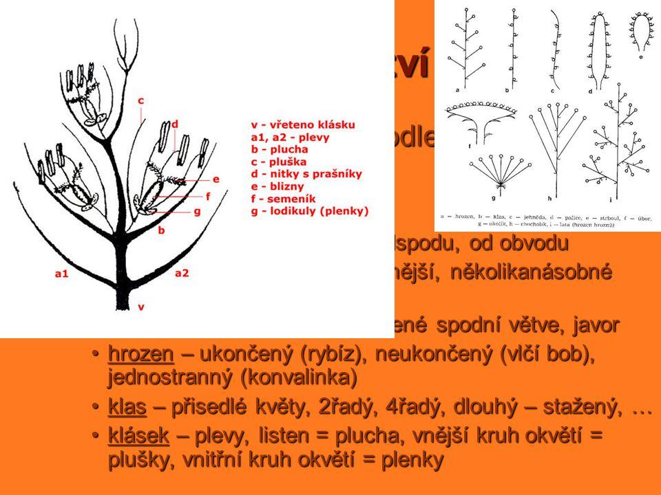 květenství = soubor květů sestavený podle zákonitostí jednoduchá