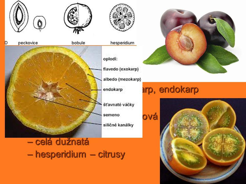 dužnaté plody peckovice bobule jedno– nebo víceplodol. jednosemenná