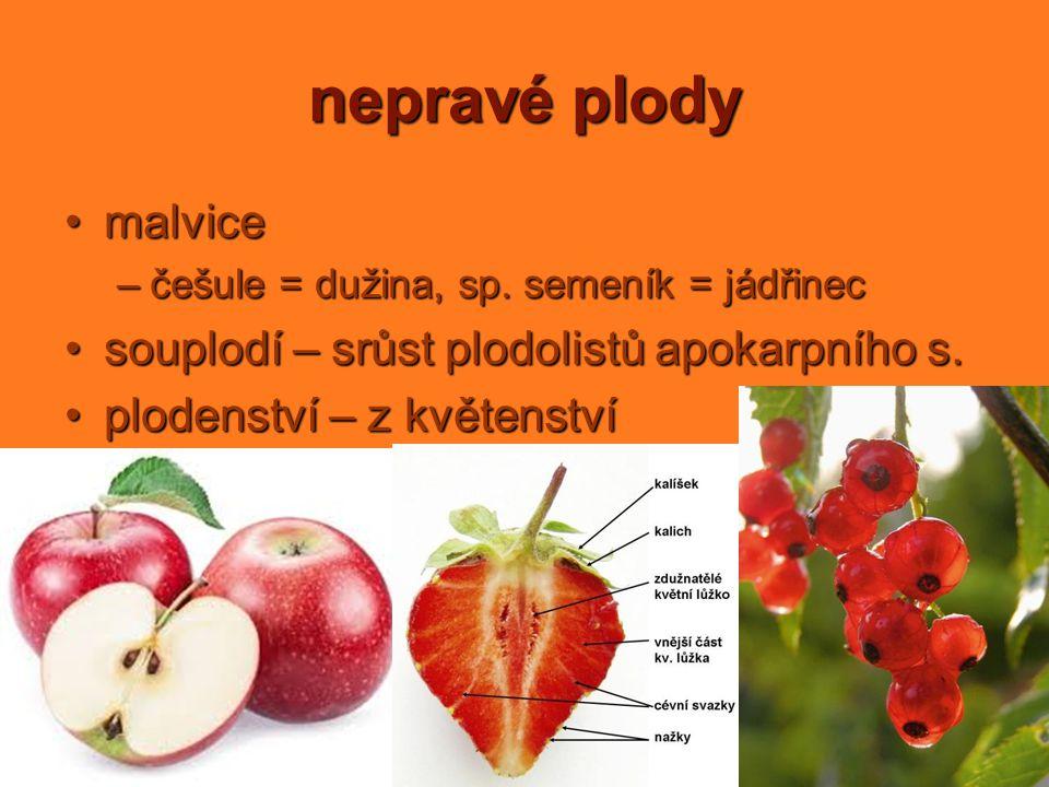 nepravé plody malvice souplodí – srůst plodolistů apokarpního s.