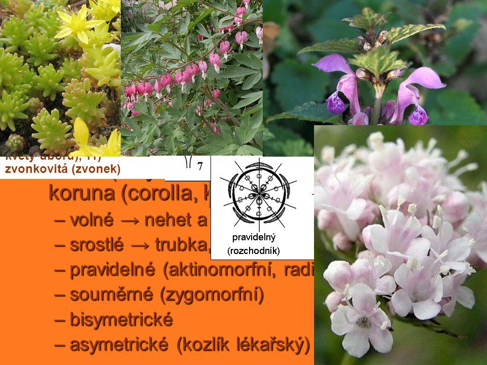 květní obaly bezobalné okvětí (perigon, okvětní listky = tepala)