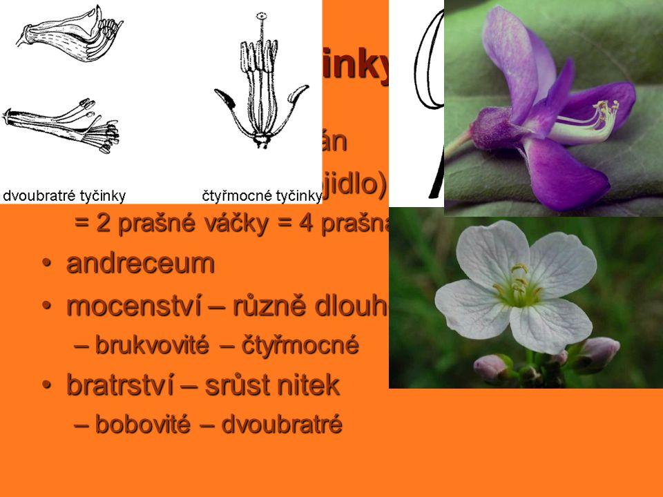 tyčinky samčí pohlavní orgán nitka a prašník (spojidlo) andreceum