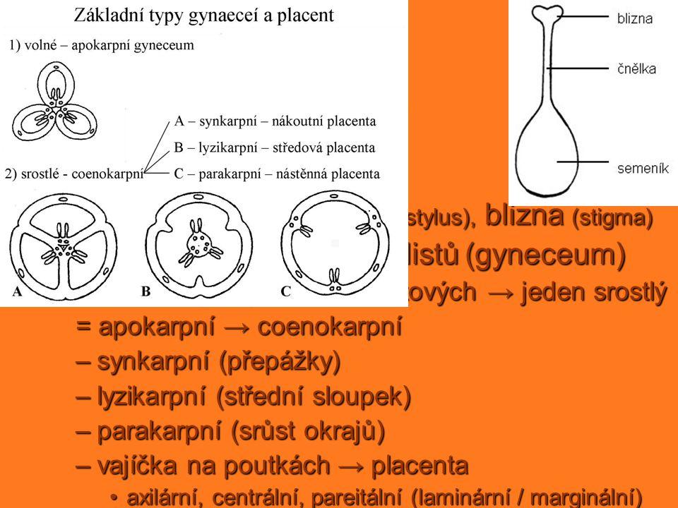 pestík samičí pohlavní orgán