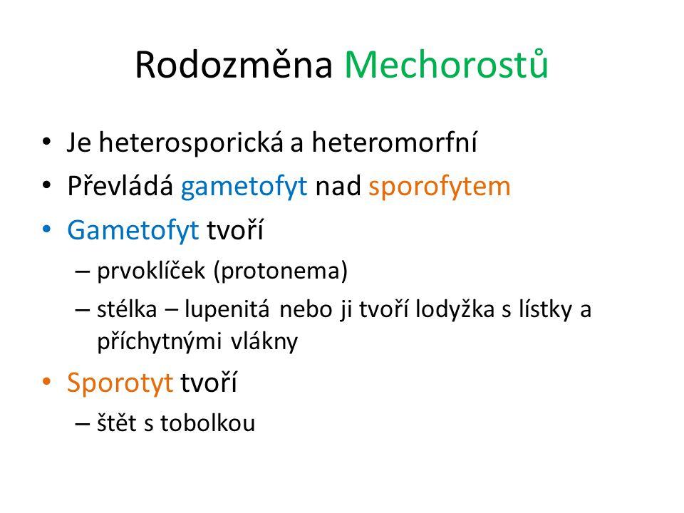 Rodozměna Mechorostů Je heterosporická a heteromorfní