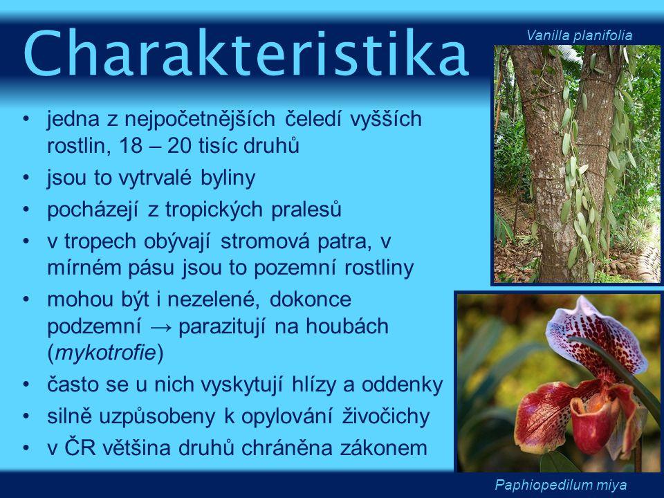 Charakteristika Vanilla planifolia. jedna z nejpočetnějších čeledí vyšších rostlin, 18 – 20 tisíc druhů.