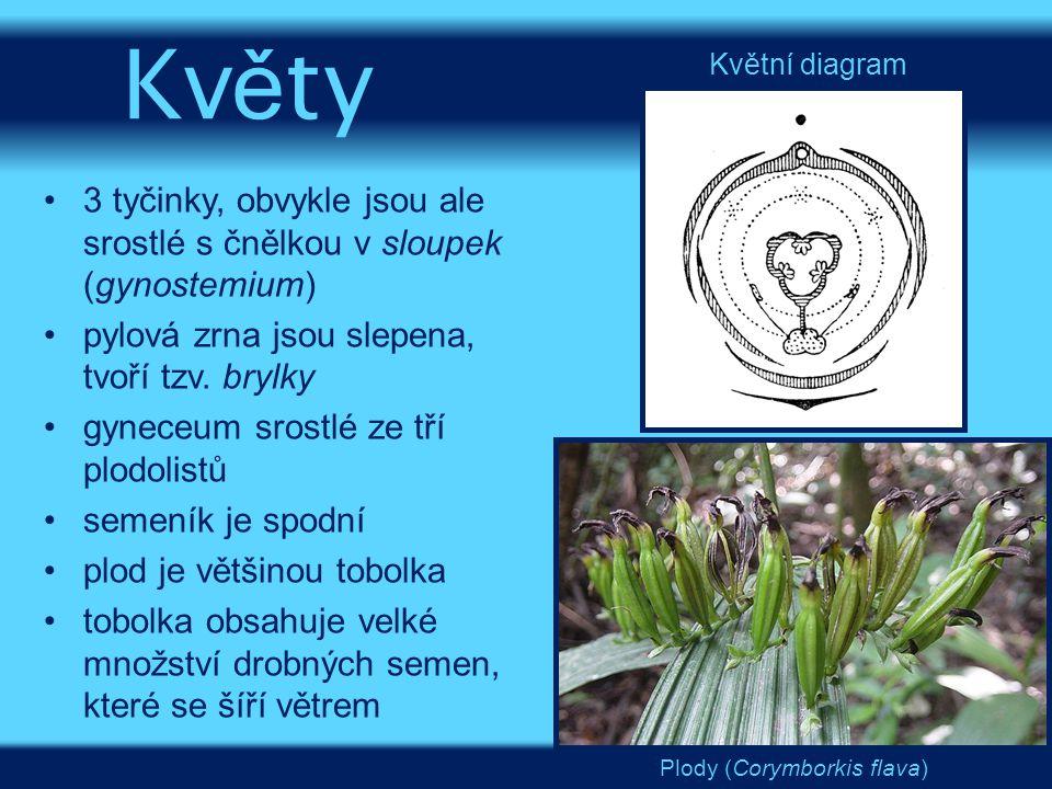 Květy Květní diagram. 3 tyčinky, obvykle jsou ale srostlé s čnělkou v sloupek (gynostemium) pylová zrna jsou slepena, tvoří tzv. brylky.
