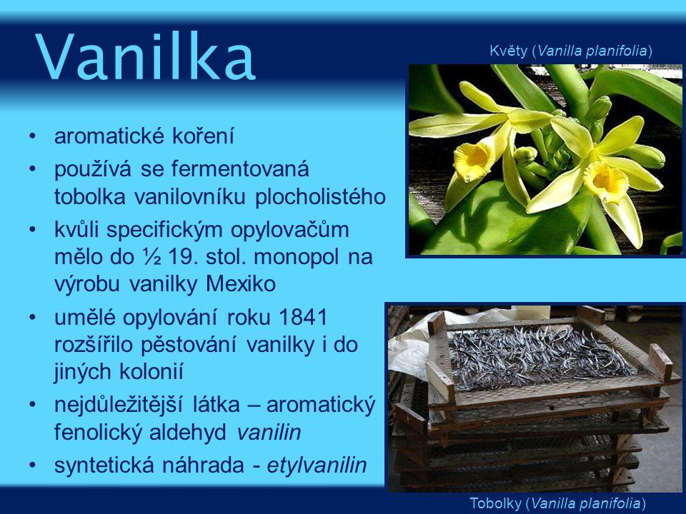 Vanilka aromatické koření