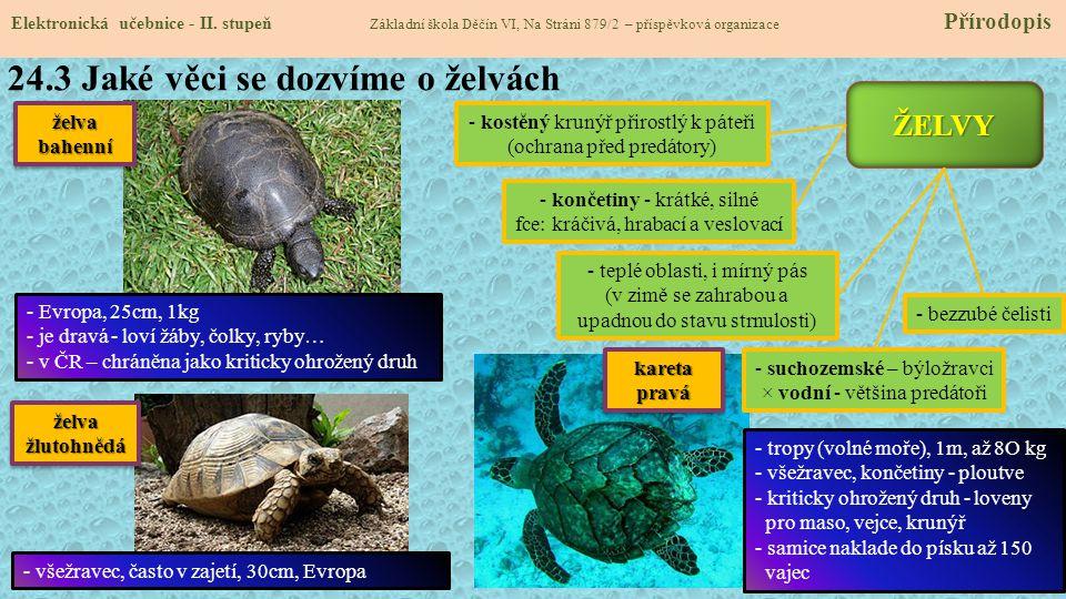 24.3 Jaké věci se dozvíme o želvách