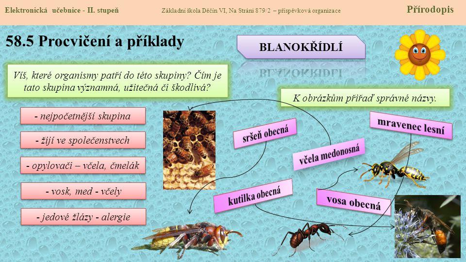 58.5 Procvičení a příklady BLANOKŘÍDLÍ mravenec lesní sršeň obecná