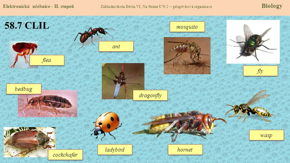58.7 CLIL mosquito ant flea fly bedbug dragonfly wasp ladybird hornet