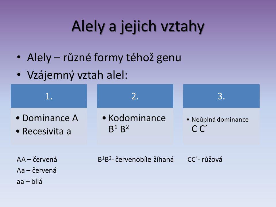 Alely a jejich vztahy Alely – různé formy téhož genu