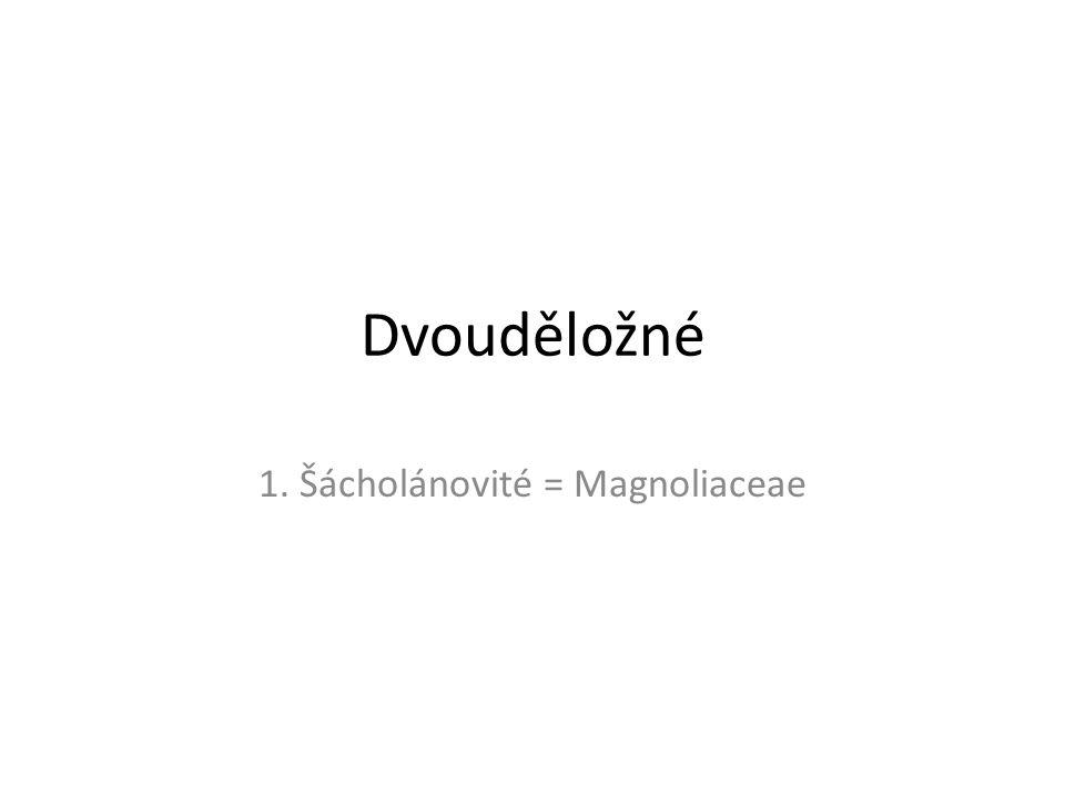 1. Šácholánovité = Magnoliaceae