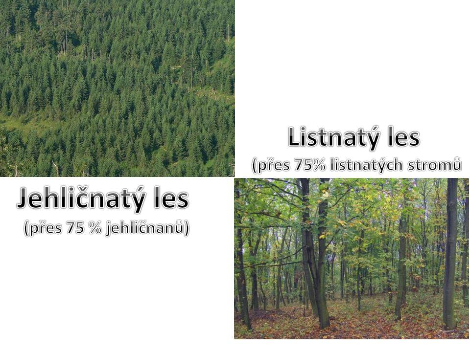 Jehličnatý les (přes 75 % jehličnanů)