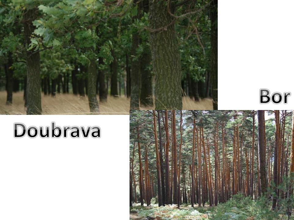Bor Doubrava