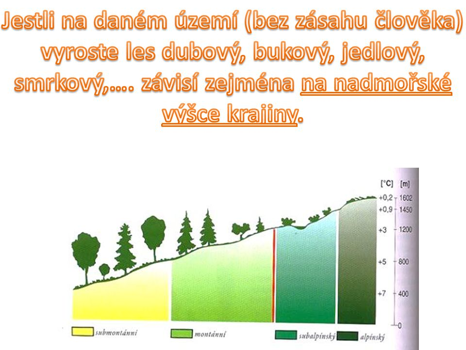 Jestli na daném území (bez zásahu člověka) vyroste les dubový, bukový, jedlový, smrkový,….