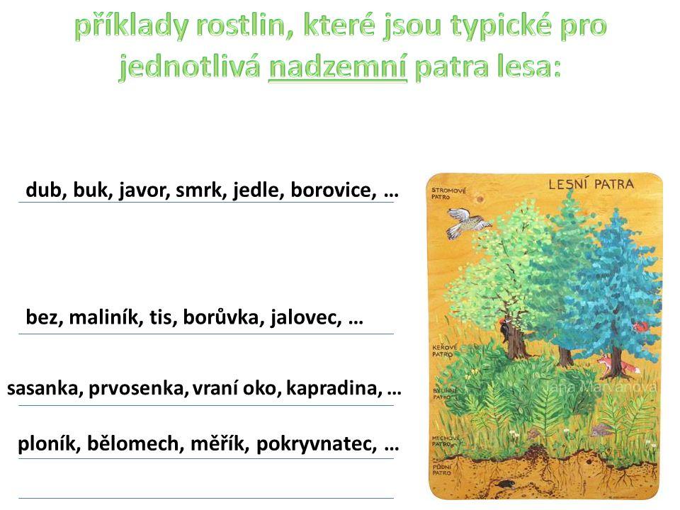 příklady rostlin, které jsou typické pro jednotlivá nadzemní patra lesa: