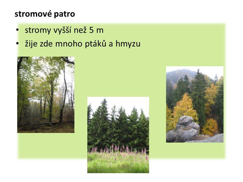 stromové patro stromy vyšší než 5 m žije zde mnoho ptáků a hmyzu