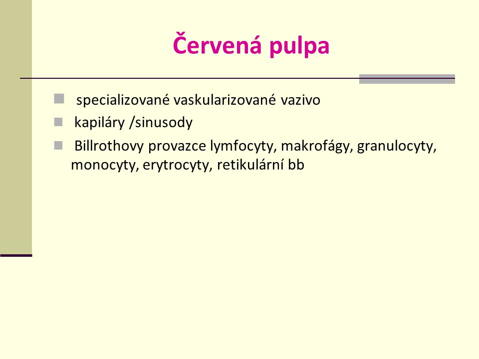 Červená pulpa specializované vaskularizované vazivo kapiláry /sinusody