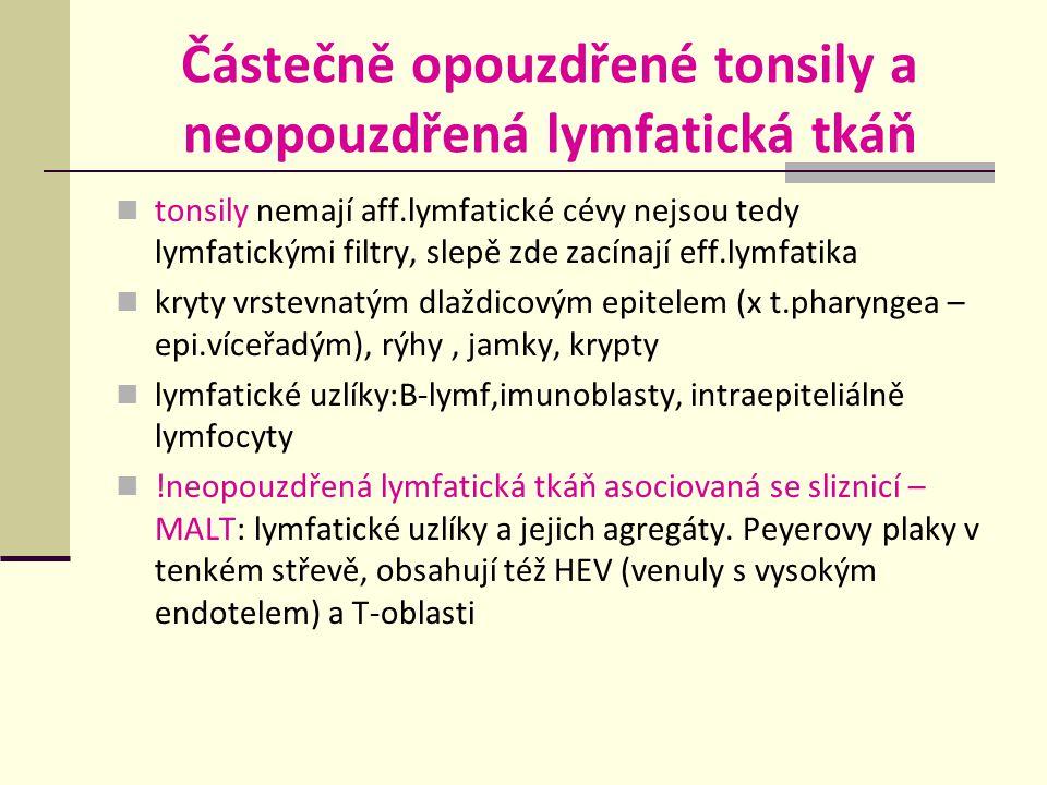 Částečně opouzdřené tonsily a neopouzdřená lymfatická tkáň