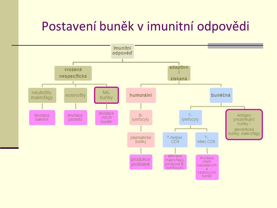 Postavení buněk v imunitní odpovědi