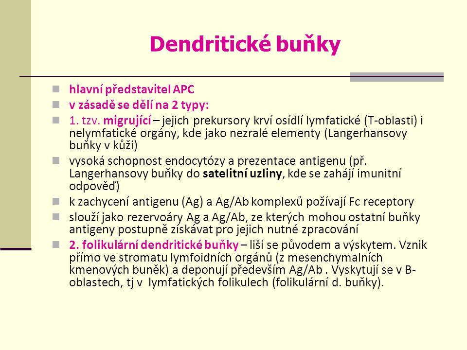 Dendritické buňky hlavní představitel APC v zásadě se dělí na 2 typy: