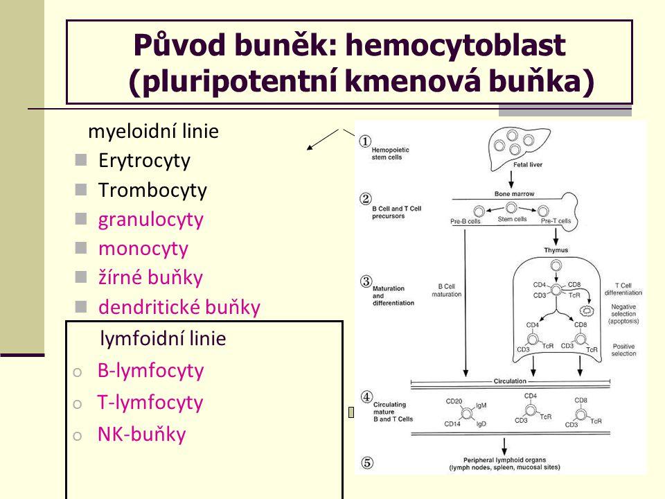 Původ buněk: hemocytoblast (pluripotentní kmenová buňka)