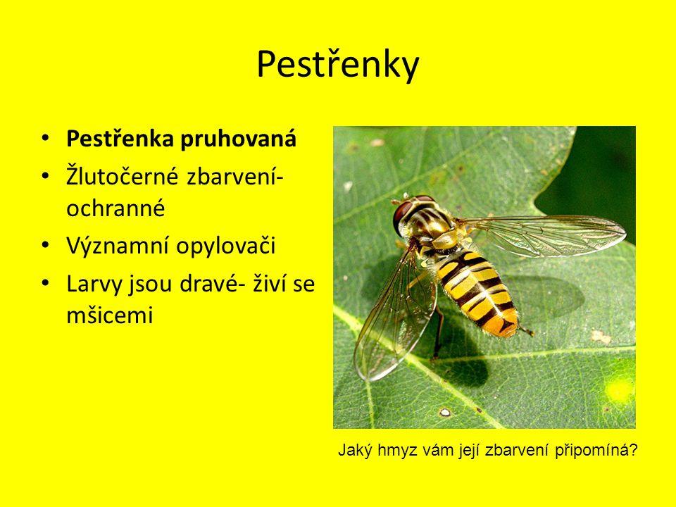 Pestřenky Pestřenka pruhovaná Žlutočerné zbarvení-ochranné
