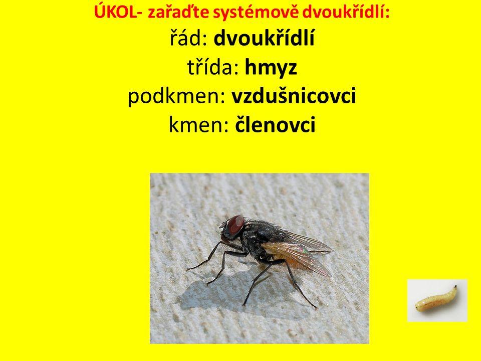 ÚKOL- zařaďte systémově dvoukřídlí: řád: dvoukřídlí třída: hmyz podkmen: vzdušnicovci kmen: členovci