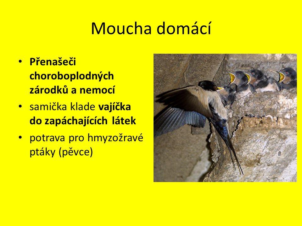 Moucha domácí Přenašeči choroboplodných zárodků a nemocí